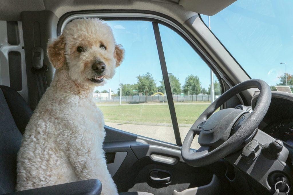 Ostaviti Psa Samog U Automobilu