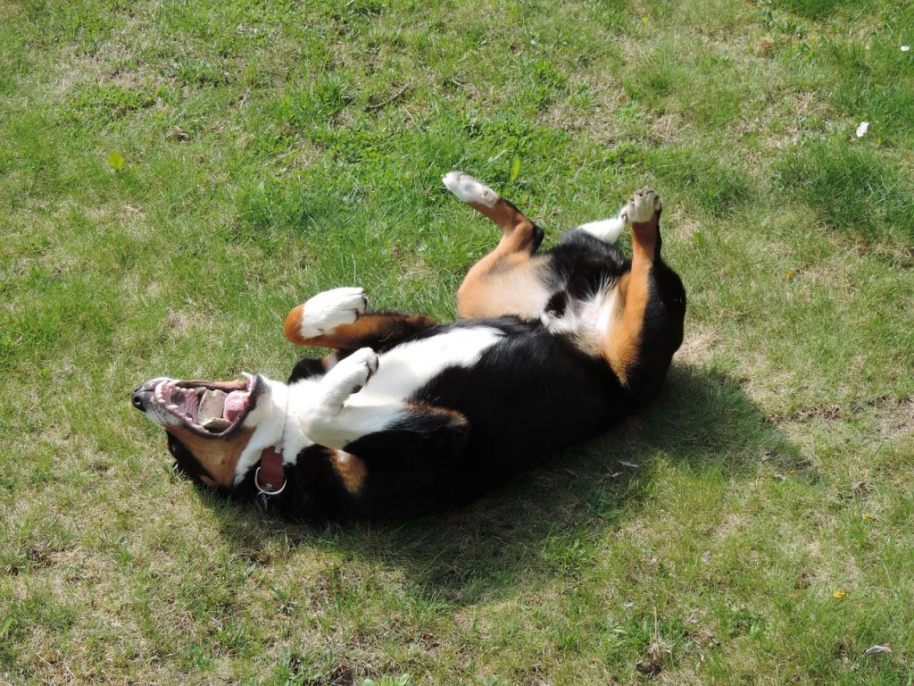 Pas Se Baca Na Leđa