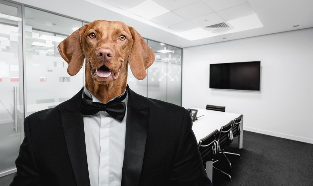 Pas voli biti produktivan