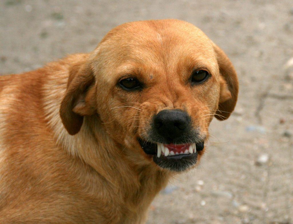 Psić Pokazuje Zube, Ali Nema Režanja