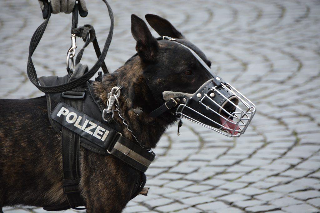 Top 10 Najboljih Policijskih Pasmina Pasa Na Svijetu