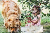Top 10 Stvari Koje Su Štetne Za Psa, A Ljudi Ih Neprestano Rade