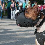 Top 10 pasmina pasa koje su se koristile u borbama pasa