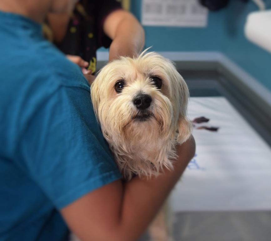 Cijepljenje i čipiranje pasa