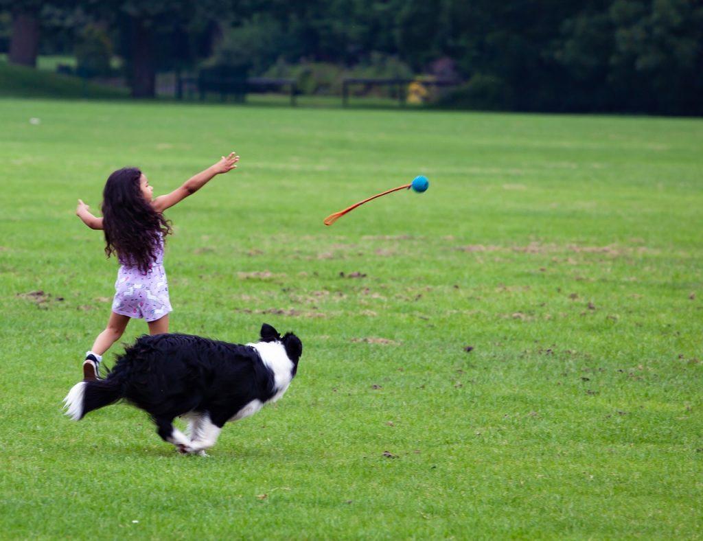 Igra za pse bacanje loptice