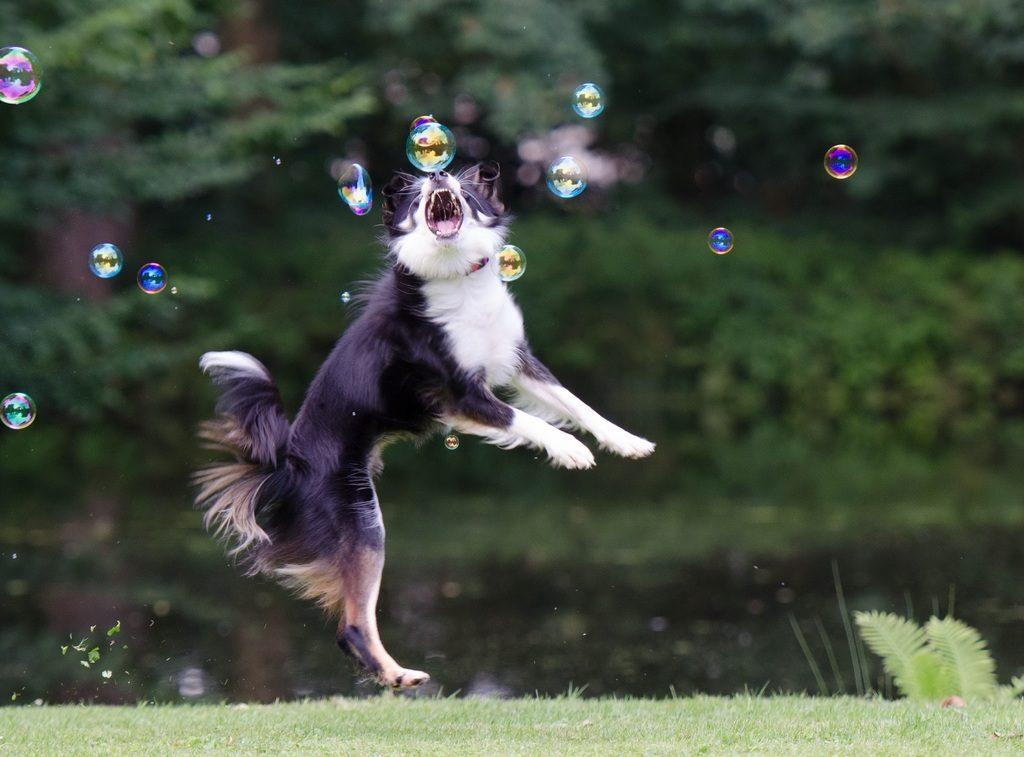 Igra za pse lovljenje mjehurića