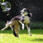 Igre za pse