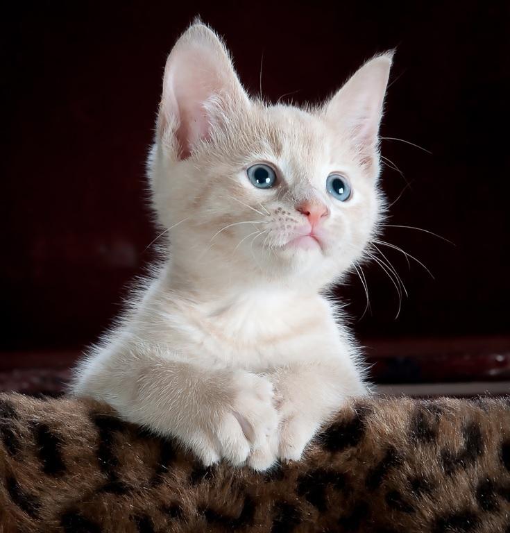 Ime za mačku