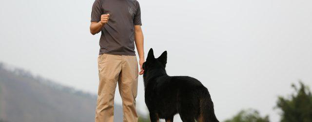 Kako dresirati psa naredbu gledaj me
