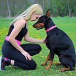 Kako dresirati psa naredbu sjedni