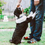 Kako naučiti psa naredbu ustani