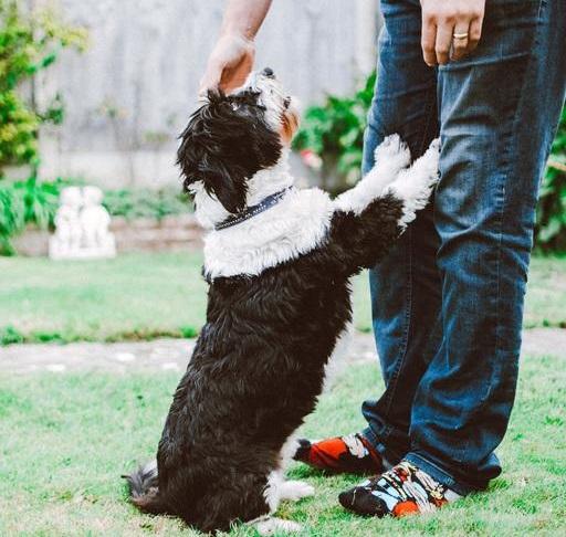 Pas Skače Na Vas