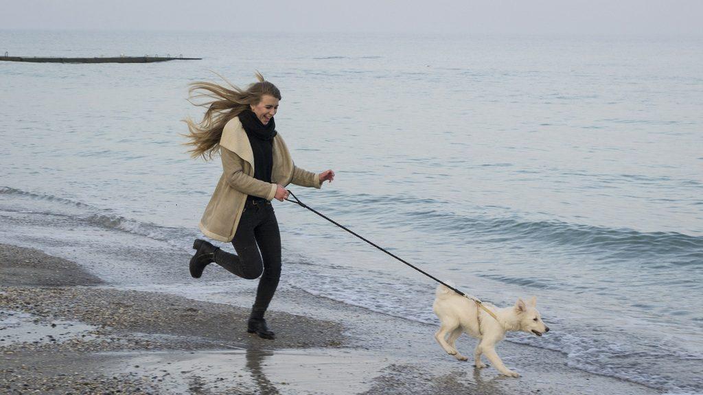 Pas trči