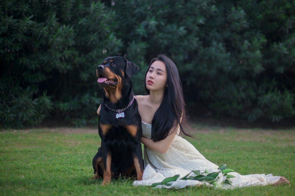 Rotvajler - najbolji pas čuvar