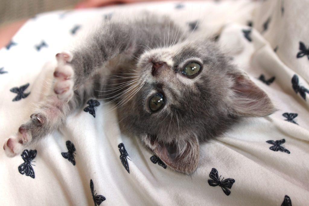 besplatni veliki maca vids