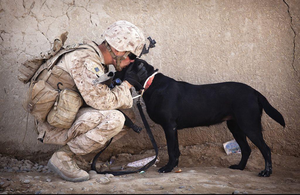Top 10 Najboljih Osobnih Pasa Čuvara Na Svijetu