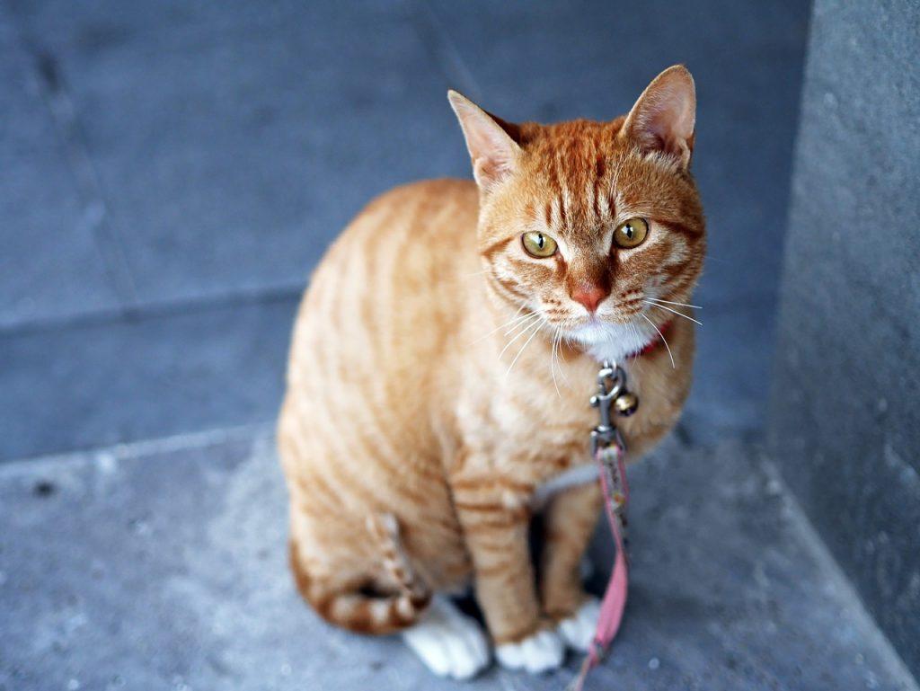 Top 100 ženskih imena za mačke