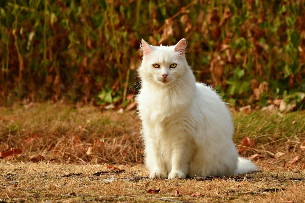 Top 100 muških imena za mačke