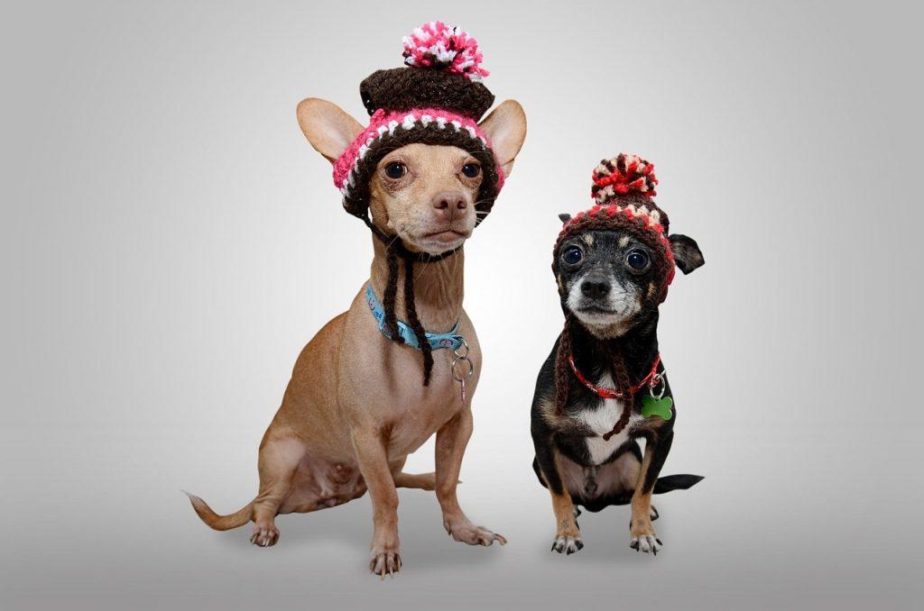 Najgluplji psi