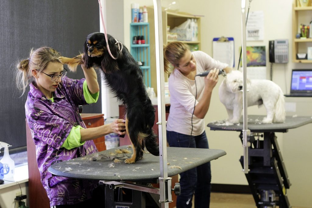 Saloni za pse i mačke