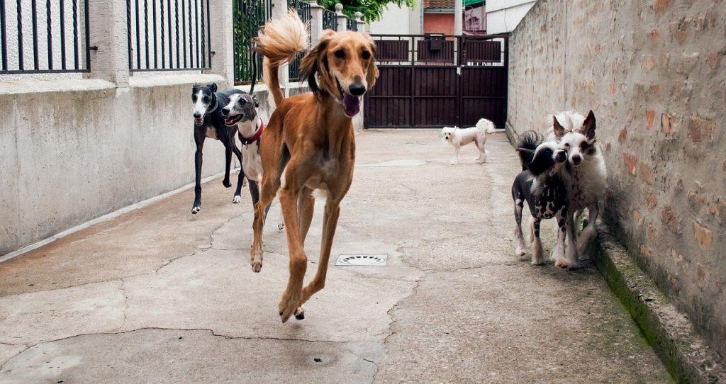 Top 10 pasmina pasa koje se ne linjaju