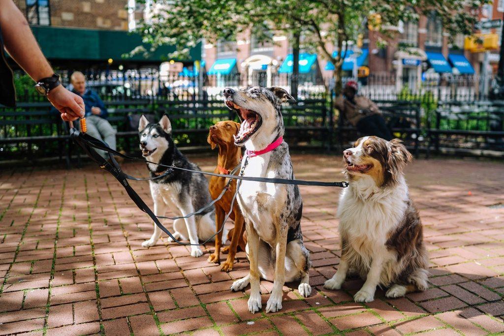 Usluga šetnje pasa