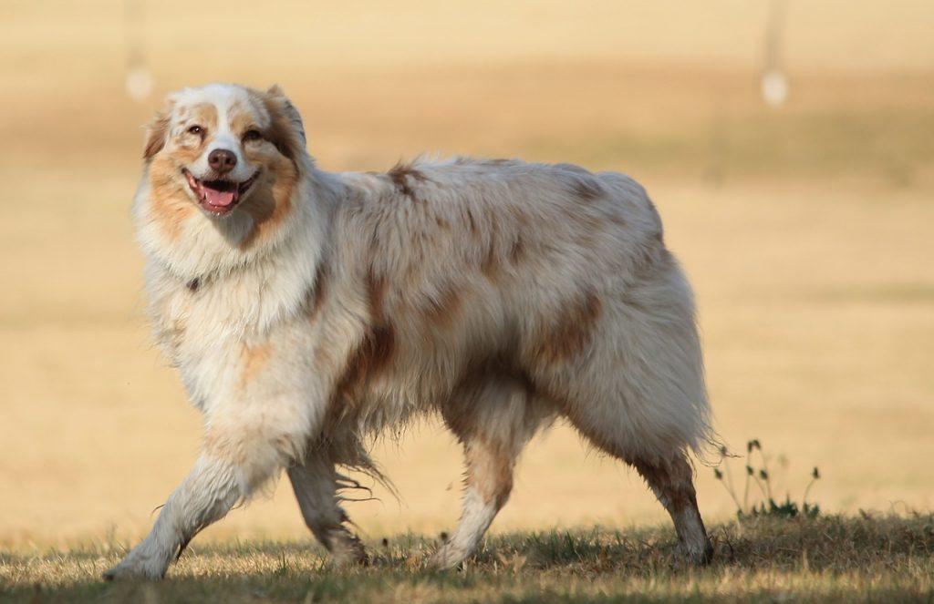 Top 10 znakova da je pas sretan