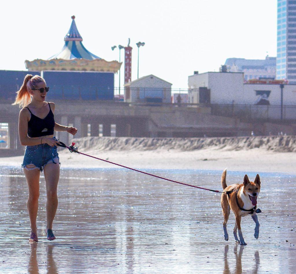Tijekom Šetnje Na Uzici Pas Želi Hodati Ispred Vas