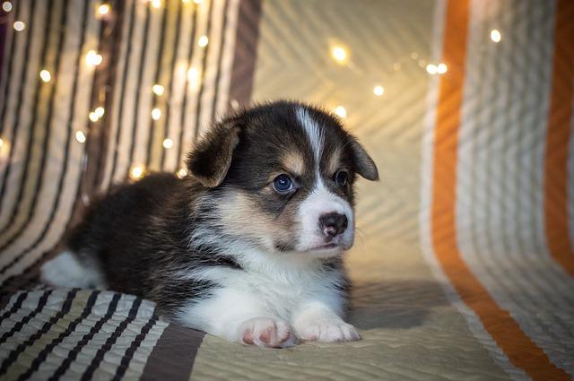 Top 10 pasmina pasa koje mogu ostati same kod kuće