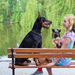 Top 10 znakova da pas želi dominirati vama
