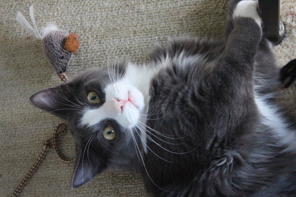 Mačka Donosi Poklon