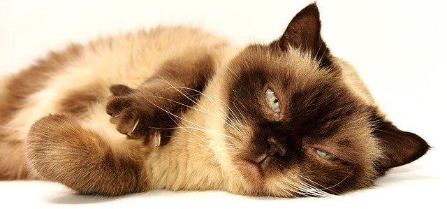 Mačka Sporo Trepće