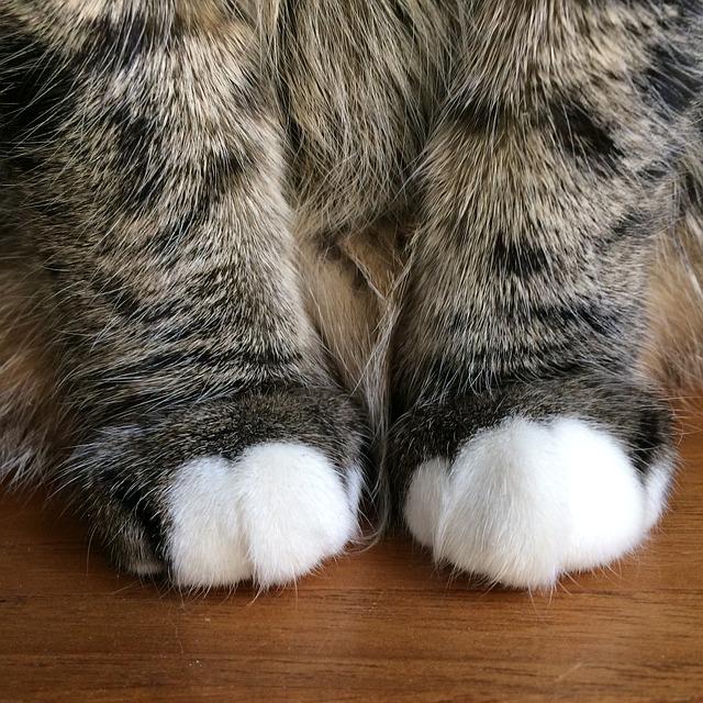 """Mačka masira """"Gnječi"""""""