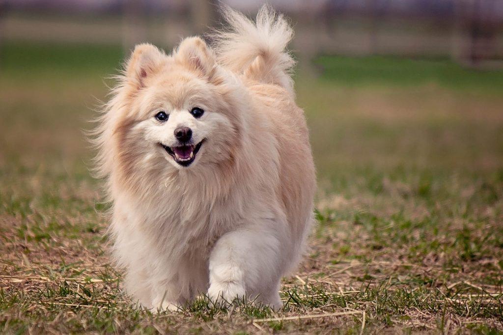 Najbundastiji psi