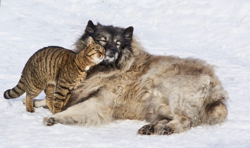 Psi i mačke