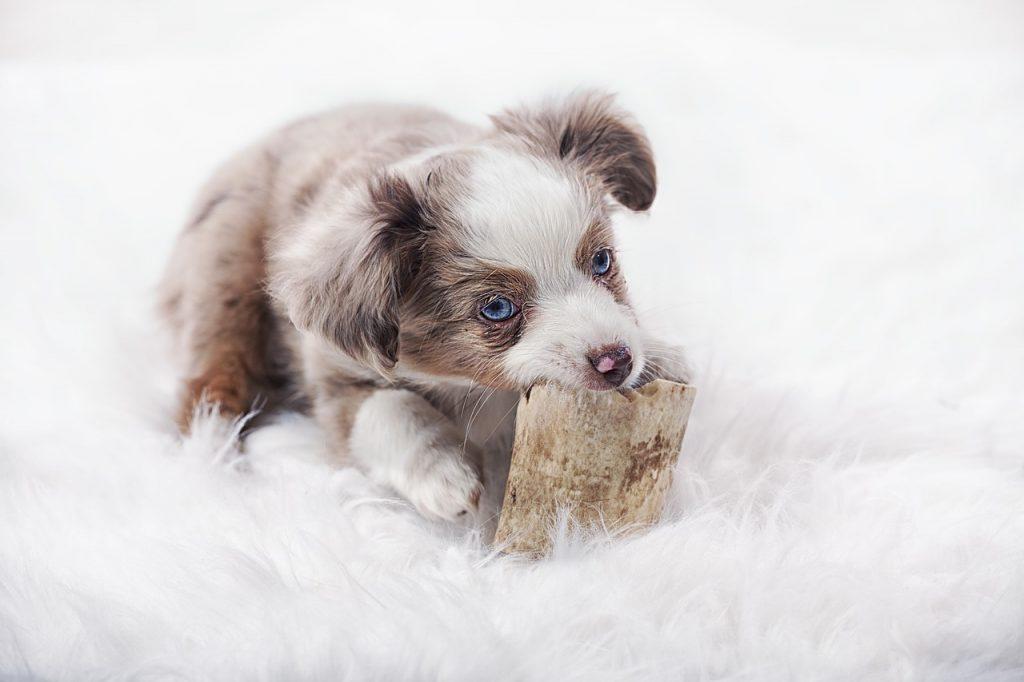 Psi s najslađim štencima
