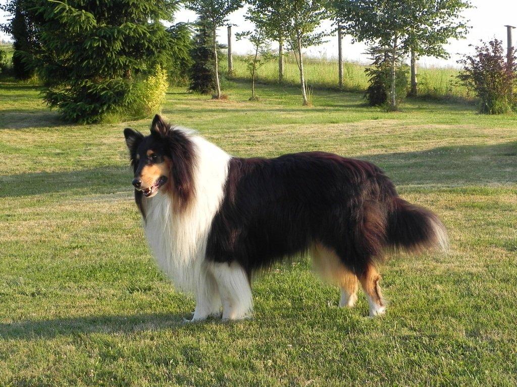 Top 10 najbundastijih pasmina pasa na svijetu