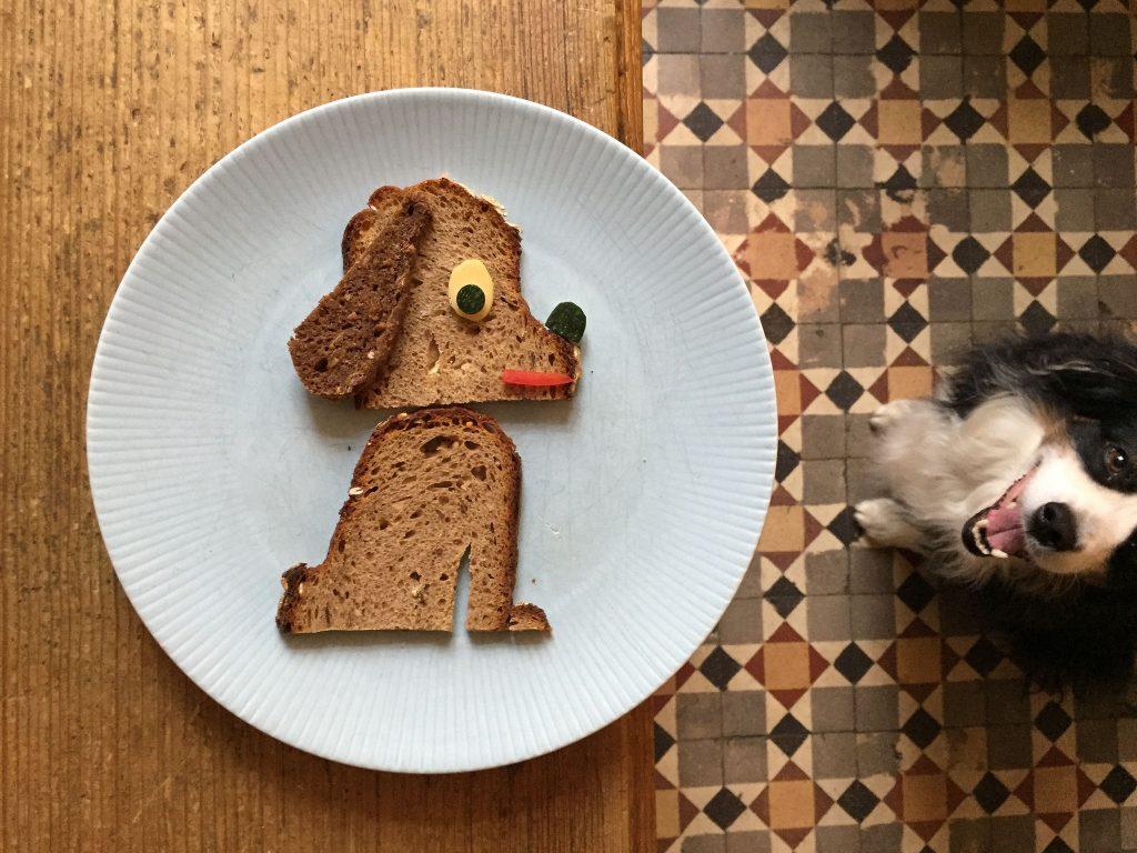 Najisplatljivija hrana za pse