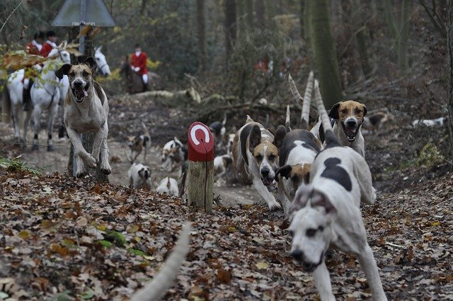 Ishrana lovačkih pasa