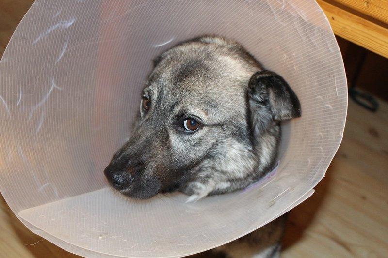 Kako zaštititi pse od koronavirusa
