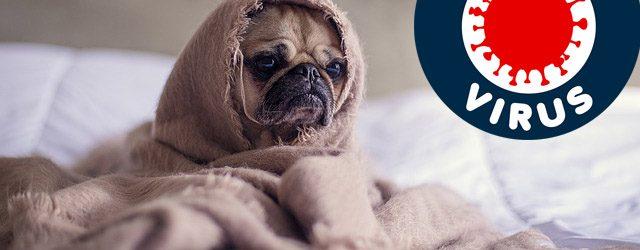 Mogu li psi dobiti koronavirus