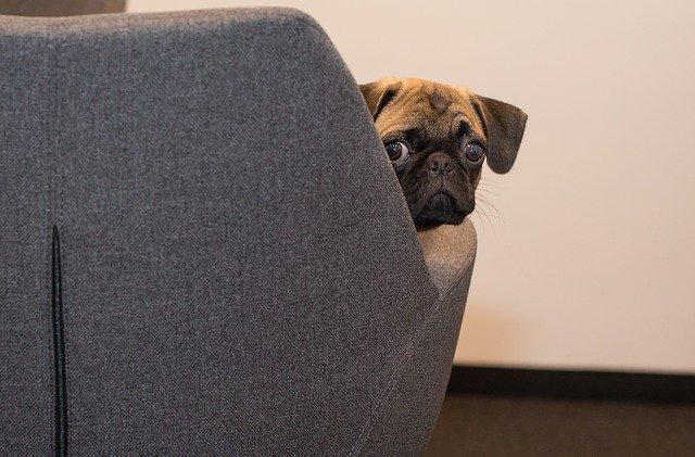 Mogu li psi zaraziti ljude koronavirusom