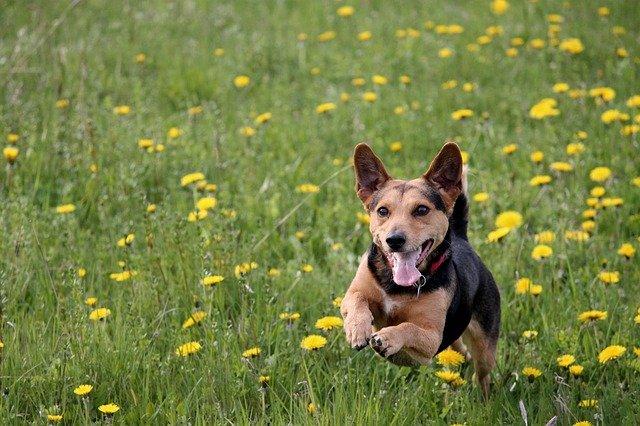 Najzaigraniji psi