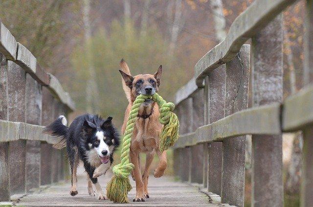 Top 10 najzaigranijih pasmina pasa na svijetu