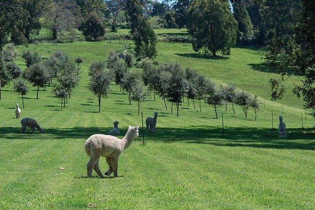 Zašto je potrebno nabaviti minimalno 3 Alpaka