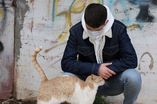 Je li koronavirus opasan za pse i mačke