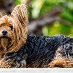 Psi koji žive najduže