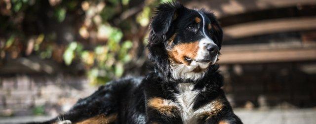 Psi koji najkraće žive