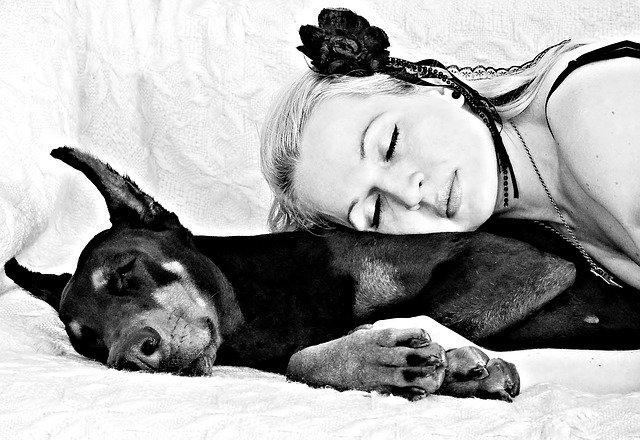Psi ne vole dosadne ljude