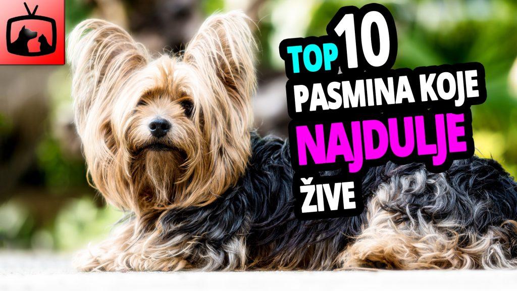 TOP 10 Pasmina Pasa Koje Najduže Žive